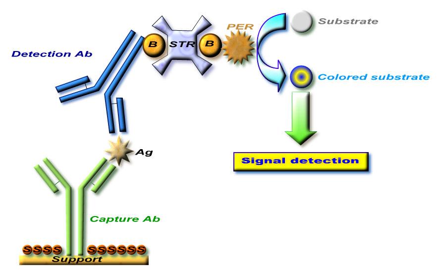 酶联免疫定量检测技术平台